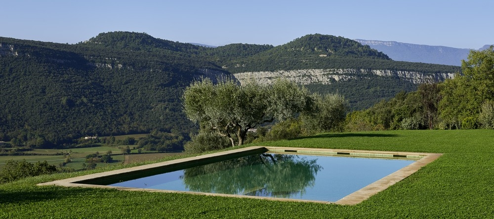 Swimming pool with olive tree